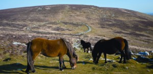 Stunning Dartmoor is a great place to explore