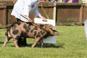 Devon-County-Show-Local-Events