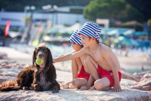 Dog-Friendly-Beach-Brixham-Holiday-Park