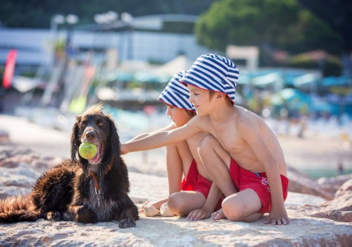 Our guide to the best dog friendly beaches in South Devon