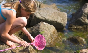 Explore the many rock pools in the coves at Brixham